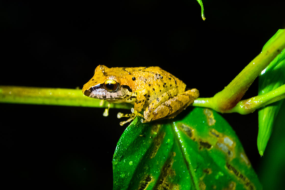 Rainforest Frog - Andean Spirit Destinations