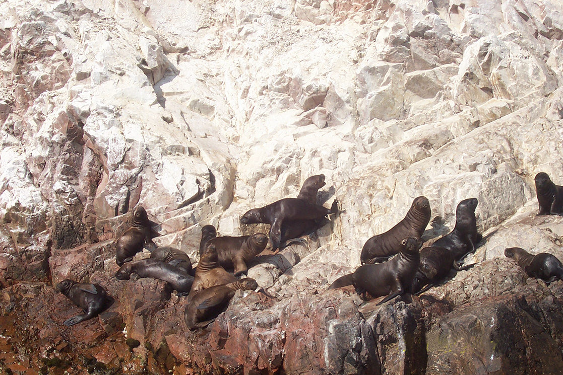 Sea Lions at San Fernando - Andean Spirit Destinations