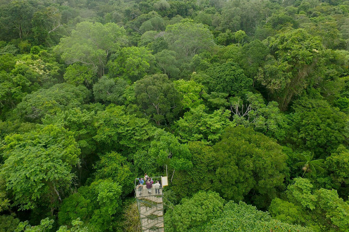 Rainforest Lookout - Andean Spirit Destinations
