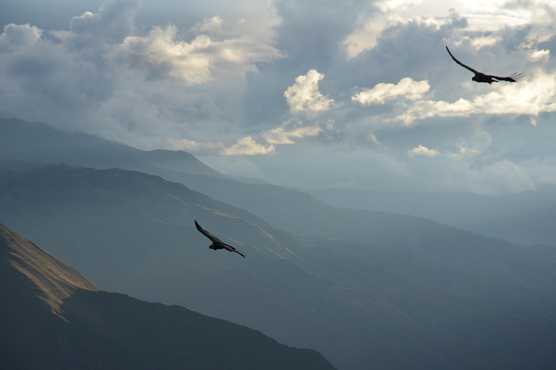 Condors near Cusco - Andean Spirit Destinations