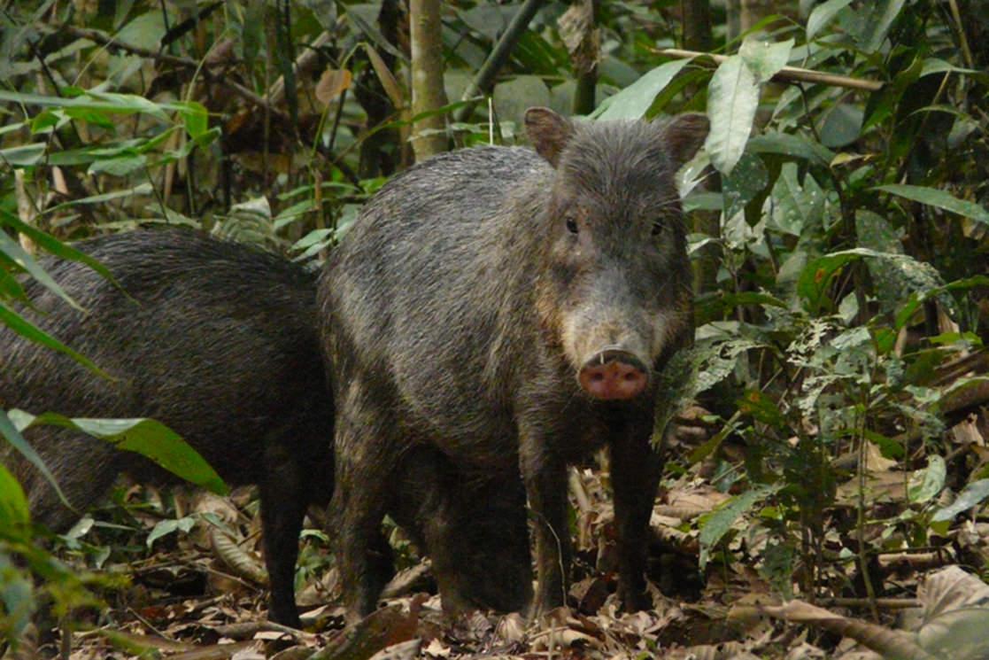 Mammal Clay Lick - Andean Spirit