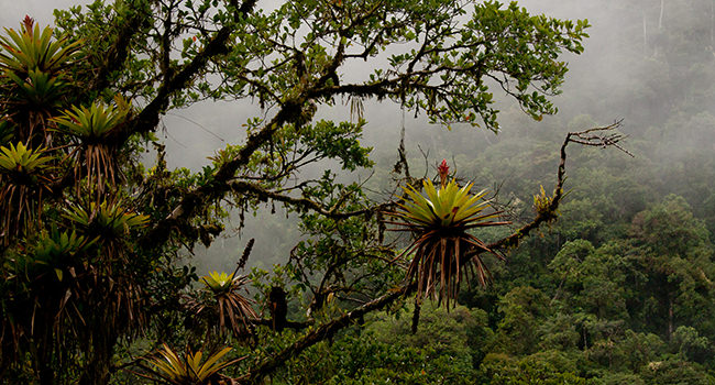 Cloud Forest Elements - Andean Spirit