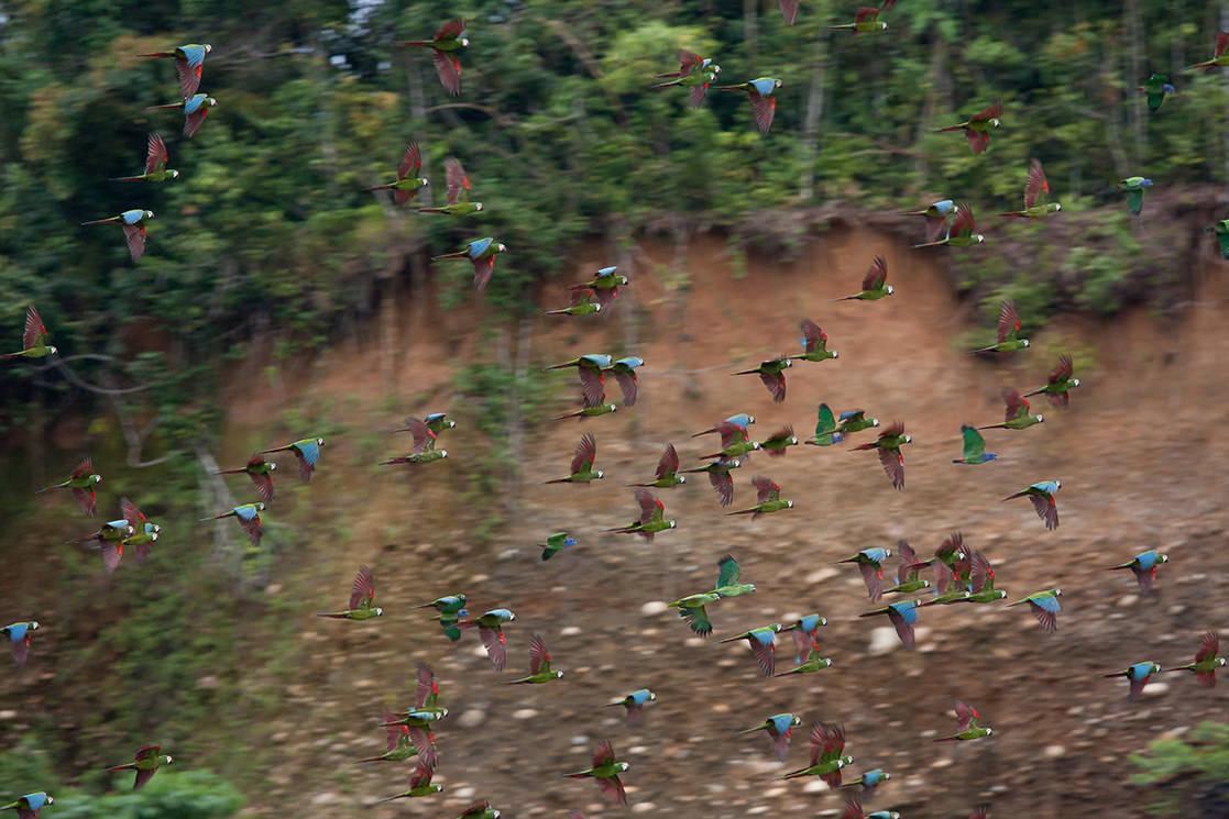 Parrot Lick in Manu Park - Andean Spirit