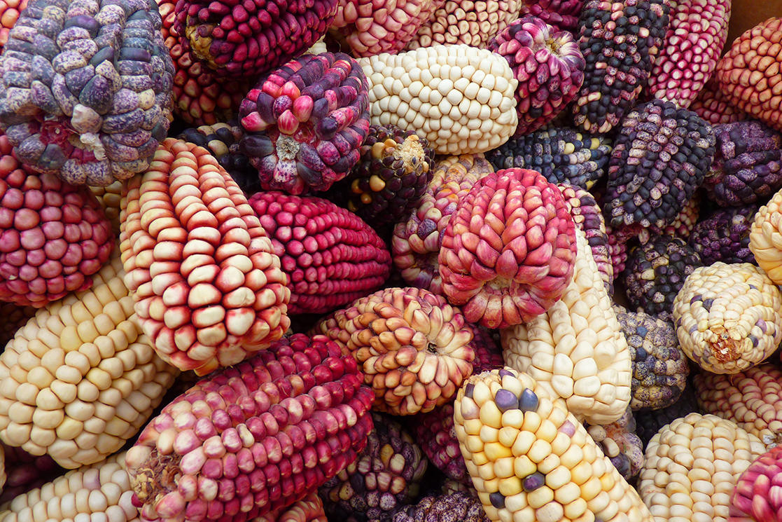 Peruvian Corn - Andean Spirit Destinations