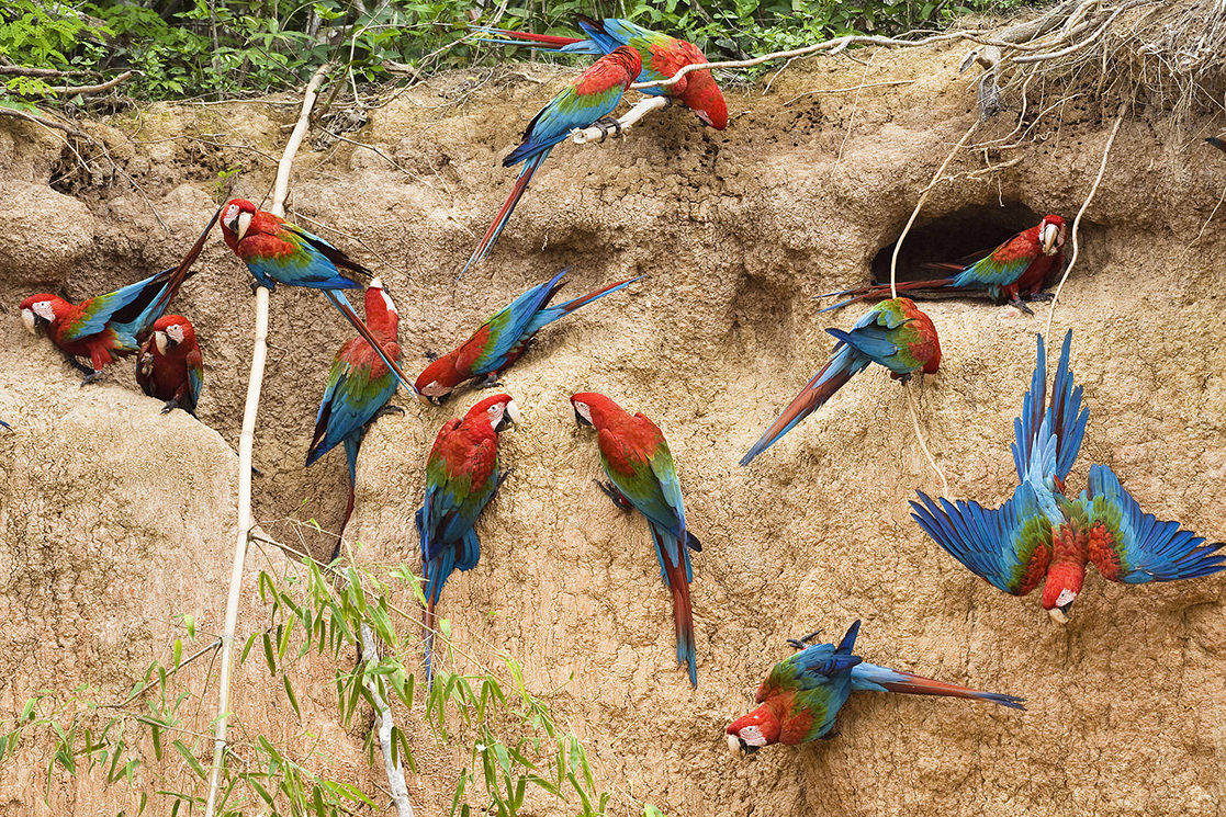 Macaw Salt Lick - Andean Spirit Destinations