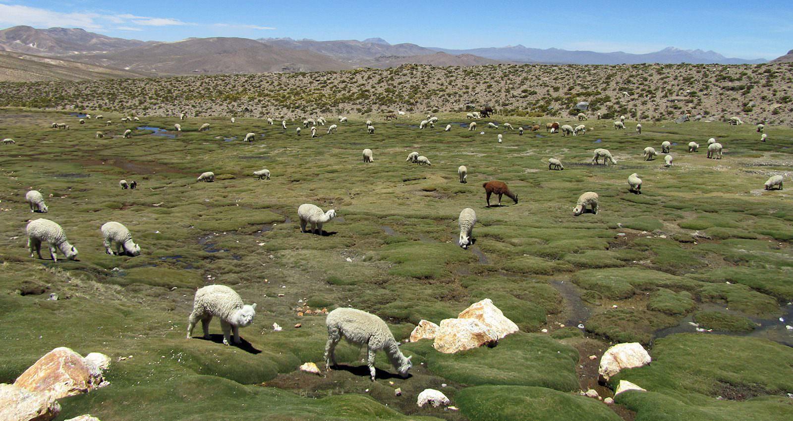 Highlands of Peru - Andean Spirit Destinations